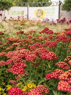 Domashny Ochag Partners Moscow Flower Show 2020