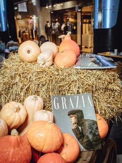 GRAZIA ECO DAY: Important Questions and Essential Answers