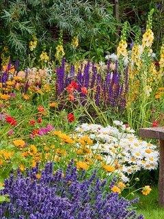 Конкурс «Мой сад» от «Домашнего Очага»